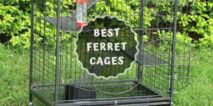 Ferret Cages Review