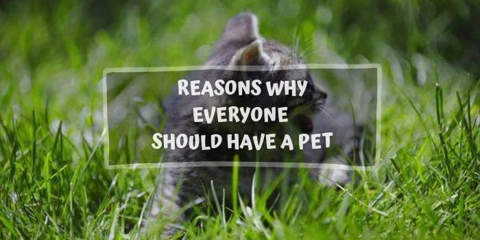 Why Everyone Should Have a Pet