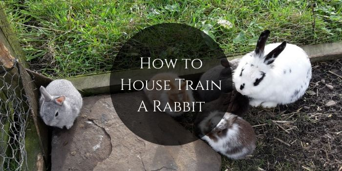 How to Train A Rabbit