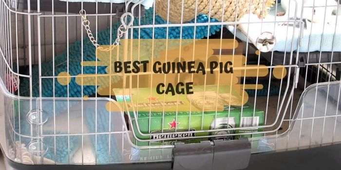 guinea pig cages reviews