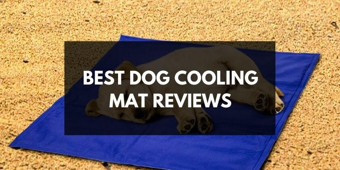 Best Dog Cooling Mat Reviews