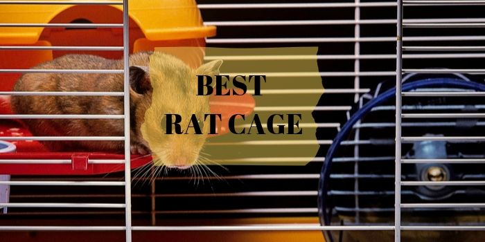 Rat Cage Reviews