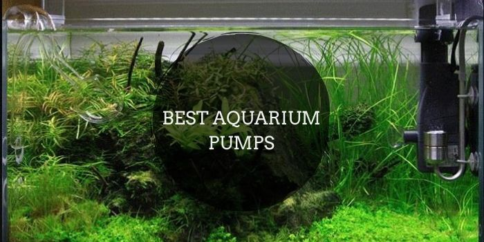 Best Aquarium Pumps