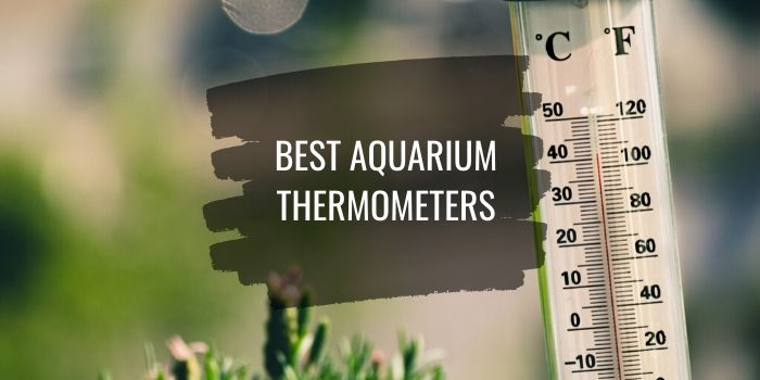 Best Aquarium Thermometers