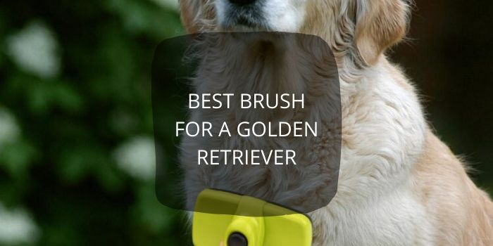 Best Brush For A Golden Retriever